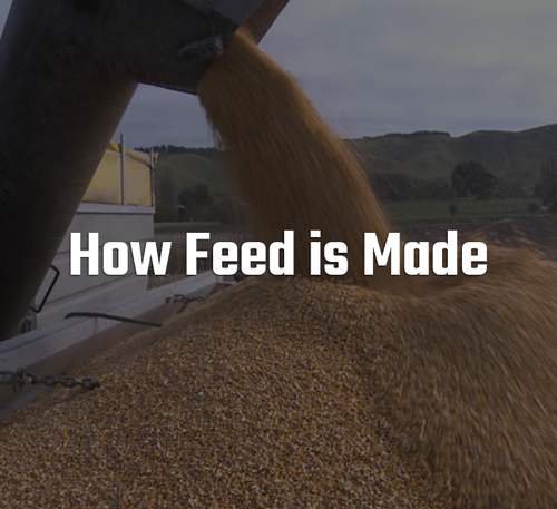 How Feed is Made